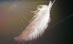 Lightweight feather stuck in a cobweb